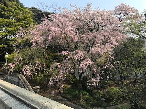 赤坂5.jpg